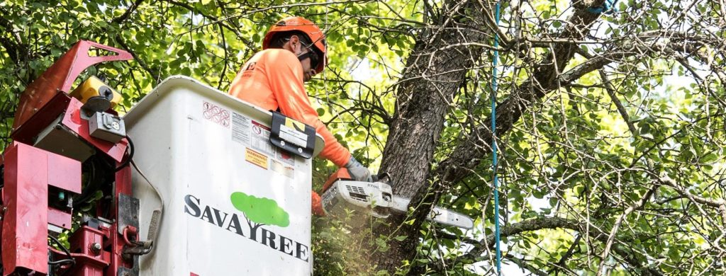 Arborist Consultations-West Palm Beach Tree Trimming and Tree Removal Services-We Offer Tree Trimming Services, Tree Removal, Tree Pruning, Tree Cutting, Residential and Commercial Tree Trimming Services, Storm Damage, Emergency Tree Removal, Land Clearing, Tree Companies, Tree Care Service, Stump Grinding, and we're the Best Tree Trimming Company Near You Guaranteed!