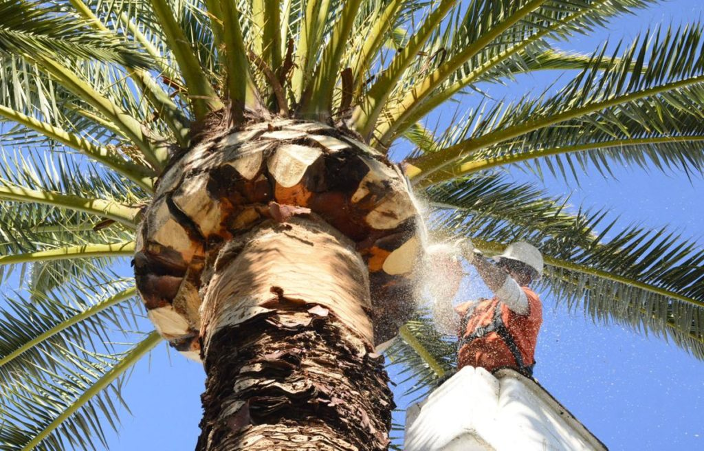 Palm Tree Trimming-West Palm Beach Tree Trimming and Tree Removal Services-We Offer Tree Trimming Services, Tree Removal, Tree Pruning, Tree Cutting, Residential and Commercial Tree Trimming Services, Storm Damage, Emergency Tree Removal, Land Clearing, Tree Companies, Tree Care Service, Stump Grinding, and we're the Best Tree Trimming Company Near You Guaranteed!