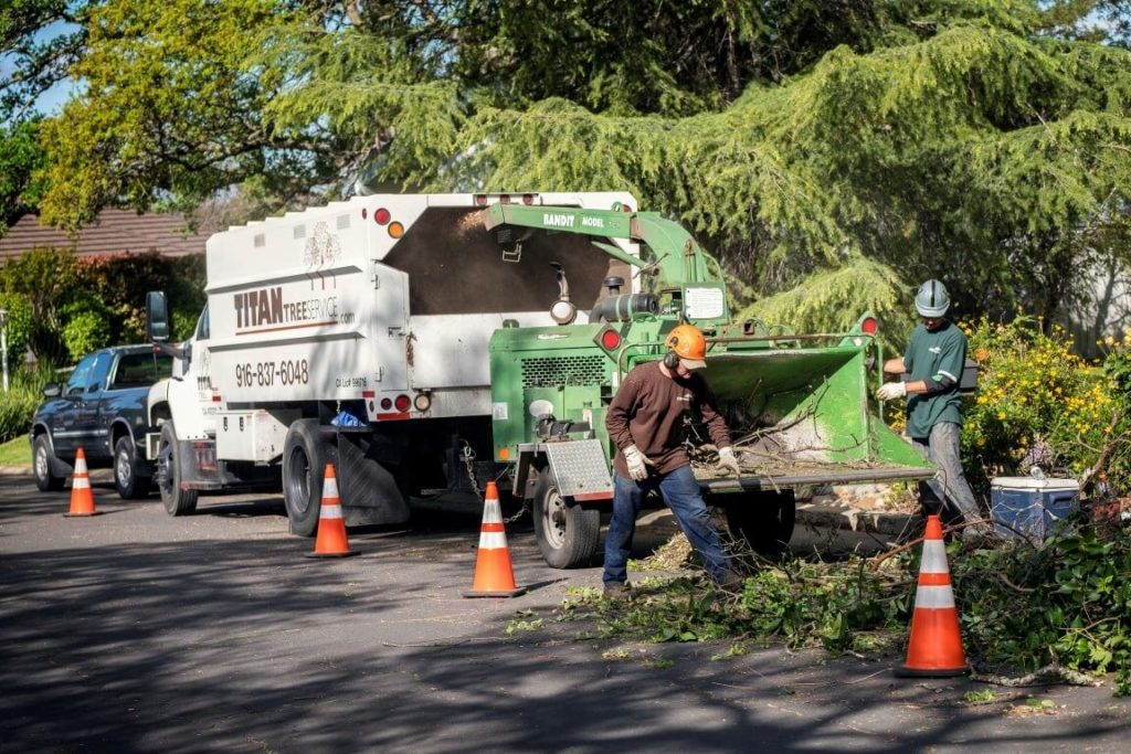 Residential Tree Services-West Palm Beach Tree Trimming and Tree Removal Services-We Offer Tree Trimming Services, Tree Removal, Tree Pruning, Tree Cutting, Residential and Commercial Tree Trimming Services, Storm Damage, Emergency Tree Removal, Land Clearing, Tree Companies, Tree Care Service, Stump Grinding, and we're the Best Tree Trimming Company Near You Guaranteed!