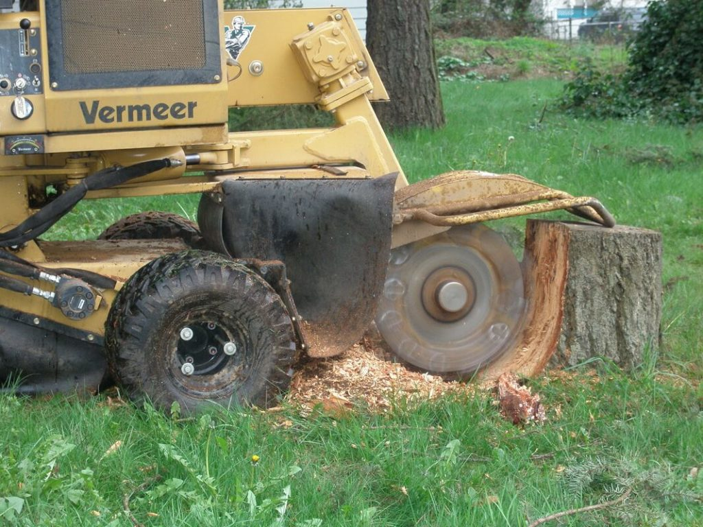 Stump Grinding & Removal-West Palm Beach Tree Trimming and Tree Removal Services-We Offer Tree Trimming Services, Tree Removal, Tree Pruning, Tree Cutting, Residential and Commercial Tree Trimming Services, Storm Damage, Emergency Tree Removal, Land Clearing, Tree Companies, Tree Care Service, Stump Grinding, and we're the Best Tree Trimming Company Near You Guaranteed!