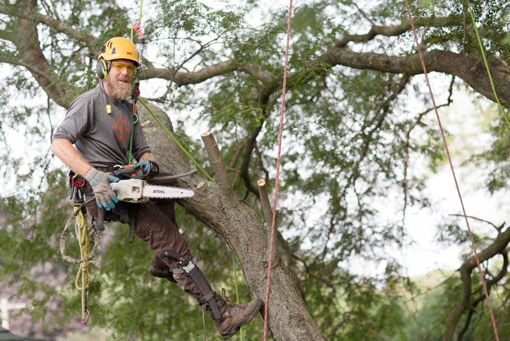 Tree Cutting-West Palm Beach Tree Trimming and Tree Removal Services-We Offer Tree Trimming Services, Tree Removal, Tree Pruning, Tree Cutting, Residential and Commercial Tree Trimming Services, Storm Damage, Emergency Tree Removal, Land Clearing, Tree Companies, Tree Care Service, Stump Grinding, and we're the Best Tree Trimming Company Near You Guaranteed!
