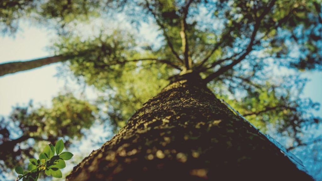 Tree Healthcare-West Palm Beach Tree Trimming and Tree Removal Services-We Offer Tree Trimming Services, Tree Removal, Tree Pruning, Tree Cutting, Residential and Commercial Tree Trimming Services, Storm Damage, Emergency Tree Removal, Land Clearing, Tree Companies, Tree Care Service, Stump Grinding, and we're the Best Tree Trimming Company Near You Guaranteed!