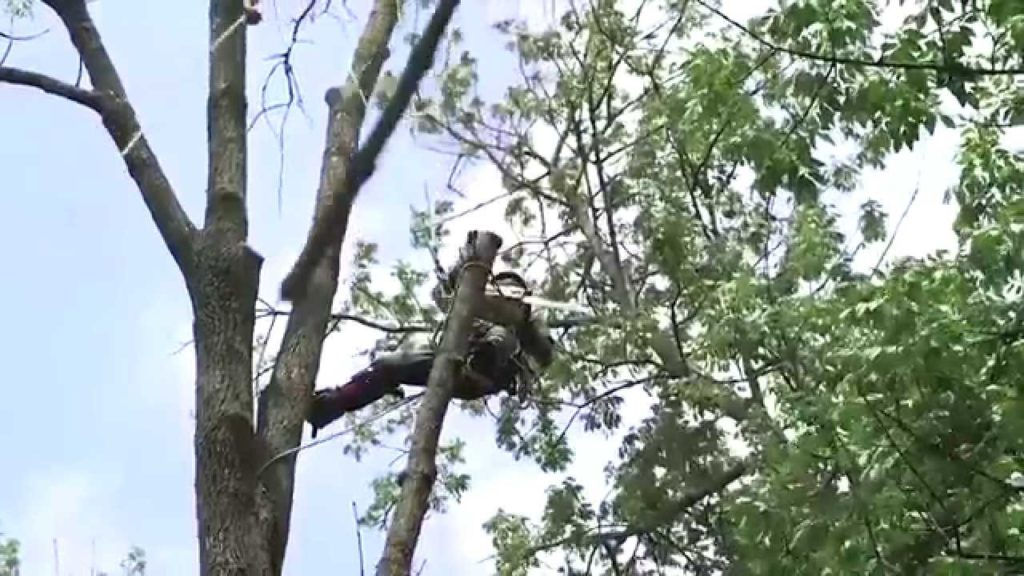 Tree Removal-West Palm Beach Tree Trimming and Tree Removal Services-We Offer Tree Trimming Services, Tree Removal, Tree Pruning, Tree Cutting, Residential and Commercial Tree Trimming Services, Storm Damage, Emergency Tree Removal, Land Clearing, Tree Companies, Tree Care Service, Stump Grinding, and we're the Best Tree Trimming Company Near You Guaranteed!