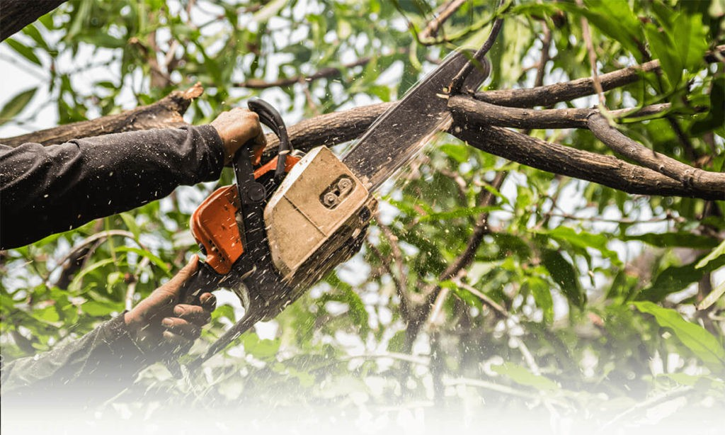 Tree Trimming Services-West Palm Beach Tree Trimming and Tree Removal Services-We Offer Tree Trimming Services, Tree Removal, Tree Pruning, Tree Cutting, Residential and Commercial Tree Trimming Services, Storm Damage, Emergency Tree Removal, Land Clearing, Tree Companies, Tree Care Service, Stump Grinding, and we're the Best Tree Trimming Company Near You Guaranteed!