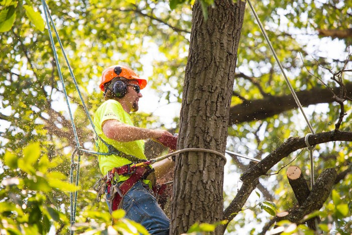 West Palm Beach Tree Trimming and Tree Removal Services Header Image copy-We Offer Tree Trimming Services, Tree Removal, Tree Pruning, Tree Cutting, Residential and Commercial Tree Trimming Services, Storm Damage, Emergency Tree Removal, Land Clearing, Tree Companies, Tree Care Service, Stump Grinding, and we're the Best Tree Trimming Company Near You Guaranteed!